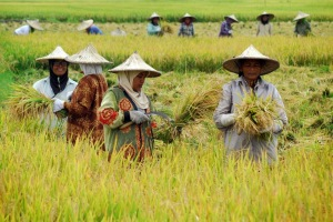 Sumber Foto, Bisnisbandung.com